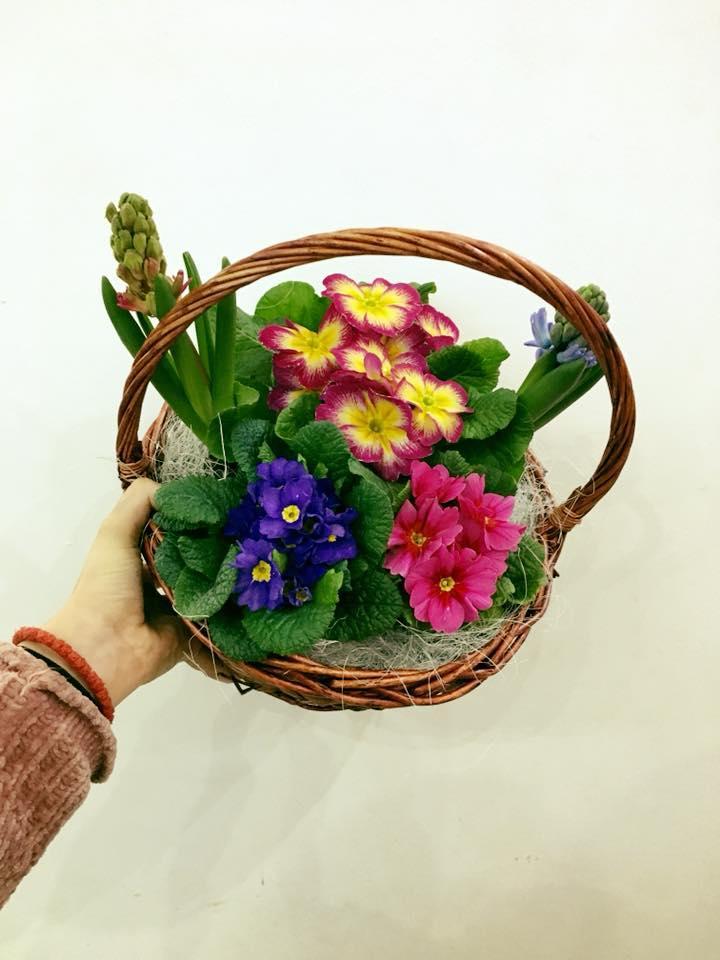 Кошница със стайни цветя
