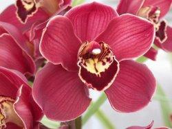 Енциклопедия на цветята